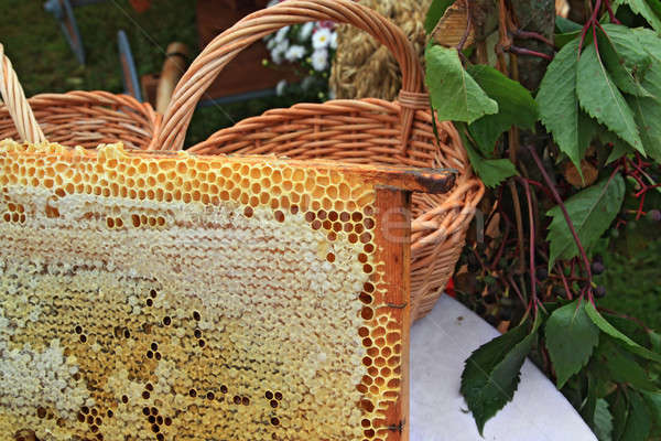 Bee honingraat frame geneeskunde werken mand Stockfoto © basel101658