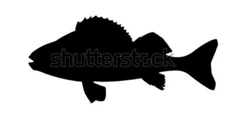 Vector tekening silhouet vis witte ontwerp Stockfoto © basel101658