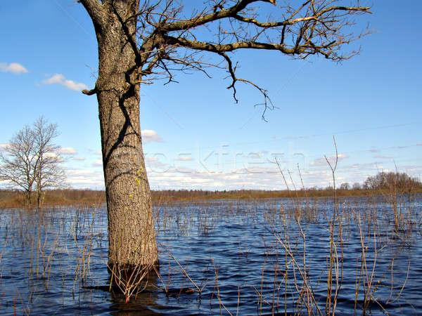 big oak in water     Stock photo © basel101658