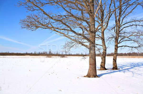 Carvalho inverno campo céu grama madeira Foto stock © basel101658