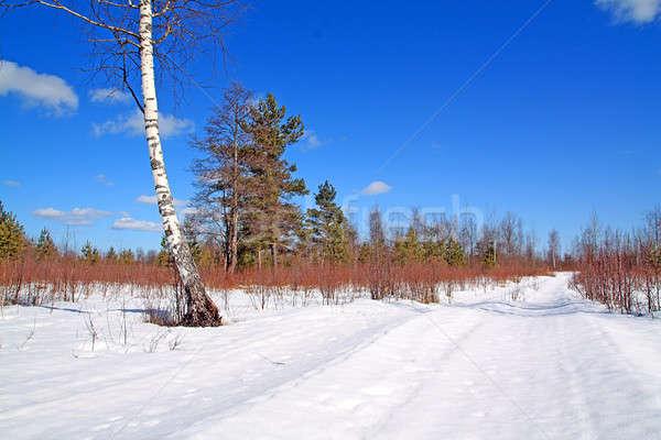 Envejecimiento carretera invierno madera naturaleza diseno Foto stock © basel101658
