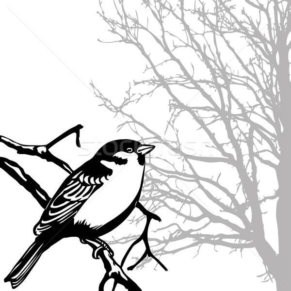 Vektor rajz sziluett madár ág tavasz Stock fotó © basel101658