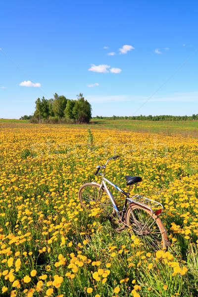 Paardebloemen veld hemel bloem gras landschap Stockfoto © basel101658