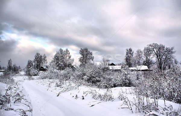 tree in snow Stock photo © basel101658