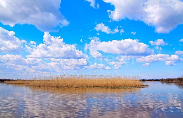 reed on lake Stock photo © basel101658