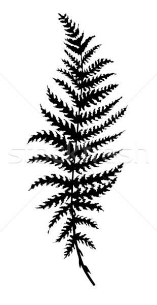 Zdjęcia stock: Wektora · sylwetka · arkusza · paproci · biały · drzewo