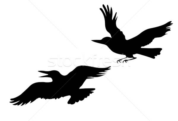 vector drawing two ravens on white background Stock photo © basel101658