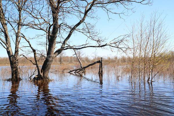 Inundação madeira velha céu natureza verde piscina Foto stock © basel101658