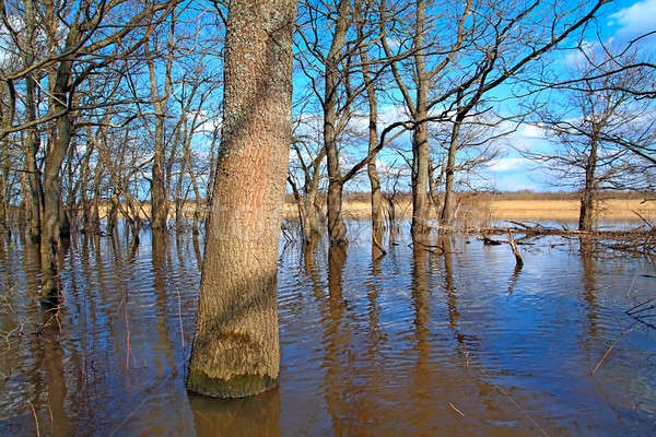 Inundação carvalho madeira céu natureza beleza Foto stock © basel101658