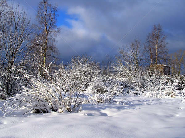 winter wood after snowstorm Stock photo © basel101658
