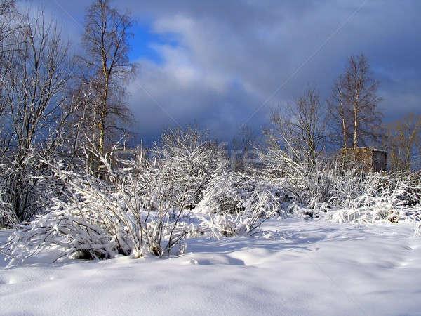 Tél fa égbolt erdő hó mező Stock fotó © basel101658