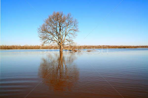дерево воды небе природы красоту бассейна Сток-фото © basel101658