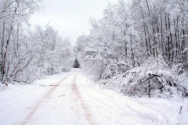 árbol nieve carretera madera forestales naturaleza Foto stock © basel101658