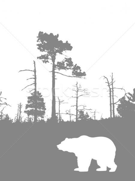 Vektör çizim siluet ayı ahşap Stok fotoğraf © basel101658
