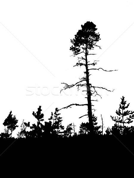вектора рисунок силуэта старые соснового древесины Сток-фото © basel101658