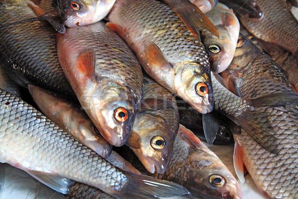 fish Stock photo © basel101658