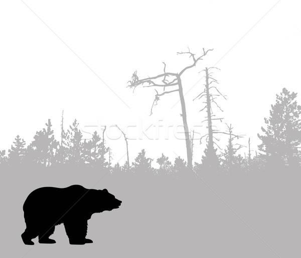 Vektör çizim siluet ayı ağaç dizayn Stok fotoğraf © basel101658