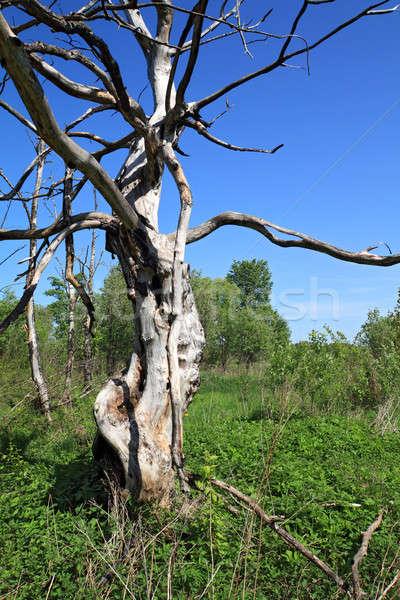 Häßlich Baum Himmel Frühling Feuer Zeichen Stock foto © basel101658