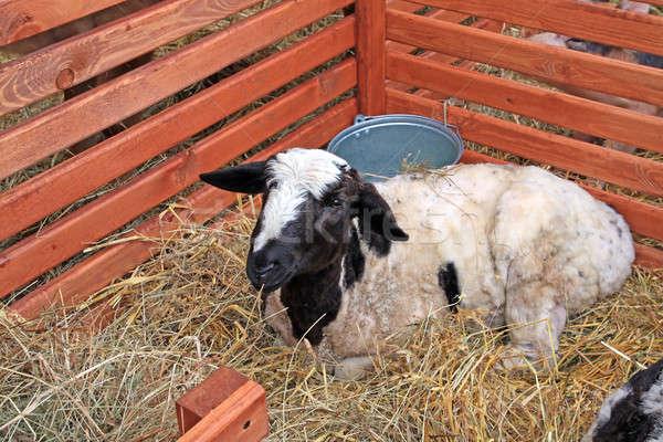 égbolt fű tehén zöld farm fekete Stock fotó © basel101658