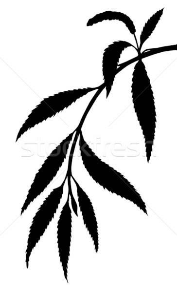 vector silhouette osier branch on white background Stock photo © basel101658