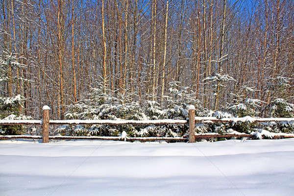 fence near wood Stock photo © basel101658