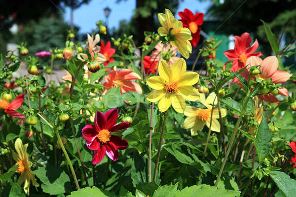 Jardín Pascua primavera hierba naturaleza belleza Foto stock © basel101658
