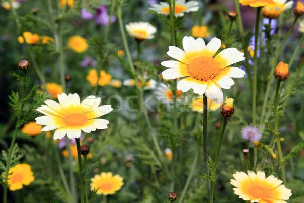 Primavera diseno casa belleza verano otono Foto stock © basel101658