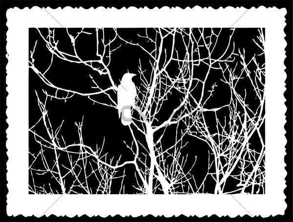 vector silhouette bird on black background Stock photo © basel101658