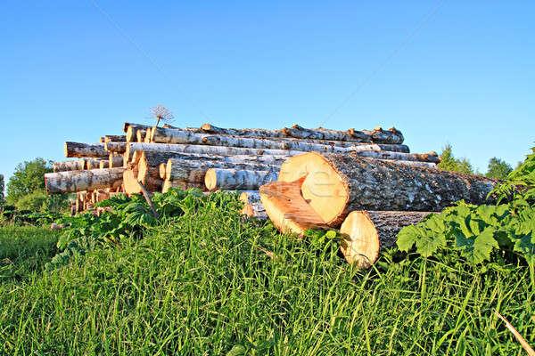 Fűrész fa textúra fa erdő ipar Stock fotó © basel101658