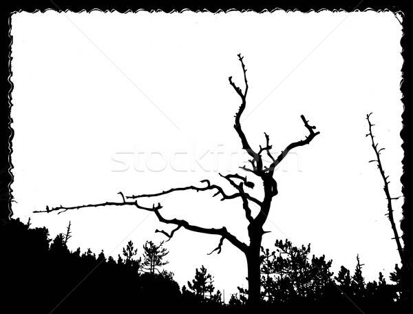 vector drawing old tree on torn sheet of paper Stock photo © basel101658