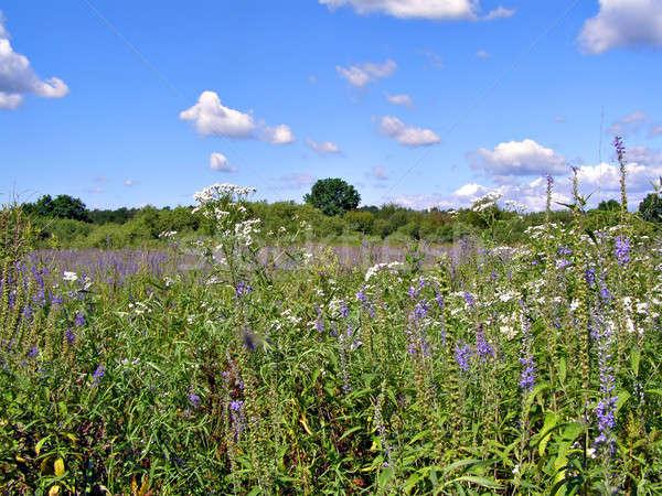 Hierba campo hierba forestales verano espacio Foto stock © basel101658
