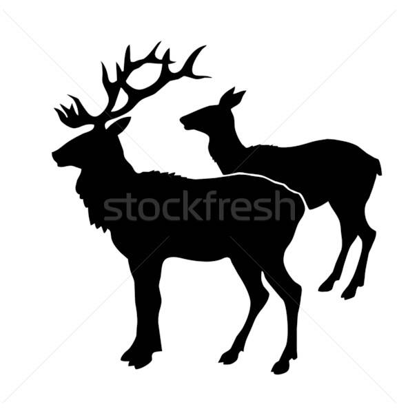illustration of the deers on white background Stock photo © basel101658