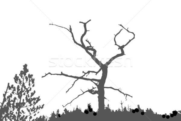 Foto stock: Vector · dibujo · silueta · secar · árbol · forestales