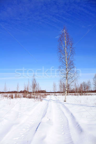 winter landscape Stock photo © basel101658