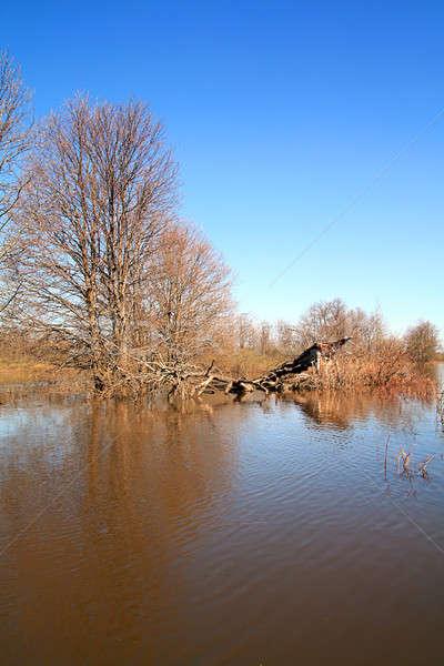 наводнения древесины небе природы красоту бассейна Сток-фото © basel101658