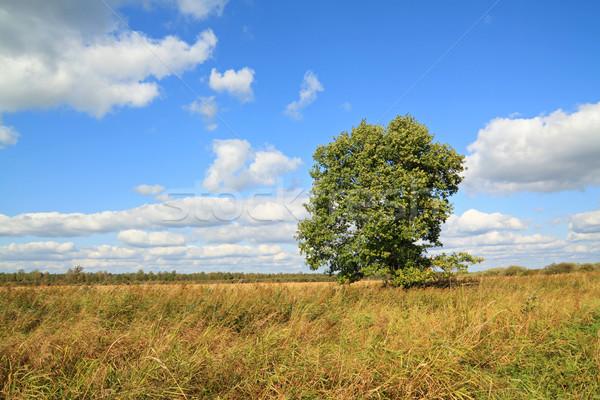 Drogen kruid veld hemel voorjaar gras Stockfoto © basel101658
