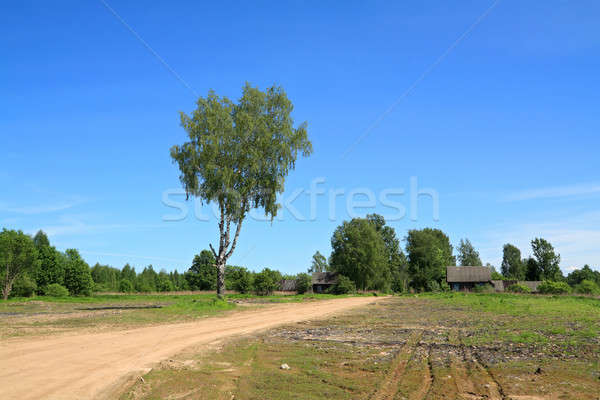 Vieillissement bouleau rural route ciel arbre Photo stock © basel101658