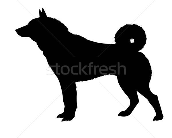 Stok fotoğraf: Siluet · yalıtılmış · beyaz · köpek · arka · plan · imzalamak