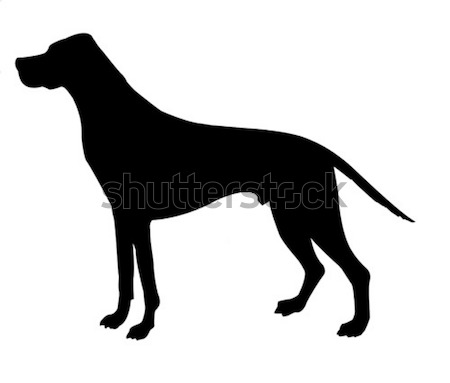 Silhouette Beagle isolé blanche design fond Photo stock © basel101658