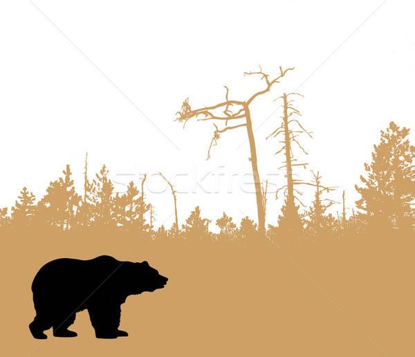 Vettore disegno silhouette orso albero design Foto d'archivio © basel101658