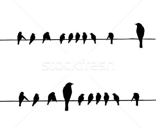 vector silhouettes of the birds on wire Stock photo © basel101658