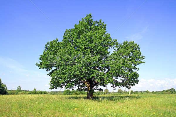 Stockfoto: Eiken · veld · hemel · voorjaar · gras · zomer