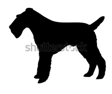 silhouette of the setter isolated on white background Stock photo © basel101658