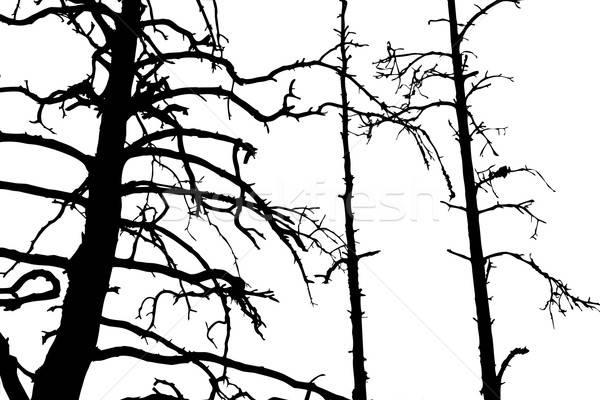 Vektör çizim siluet kuru ahşap dizayn Stok fotoğraf © basel101658