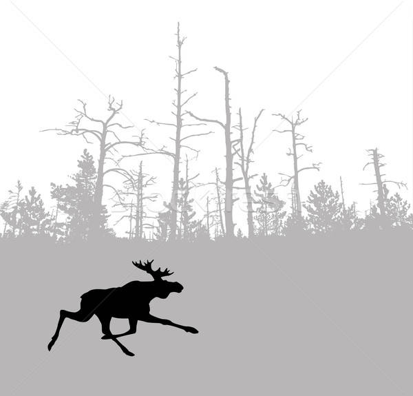 Vector tekening silhouet eland hout boom Stockfoto © basel101658