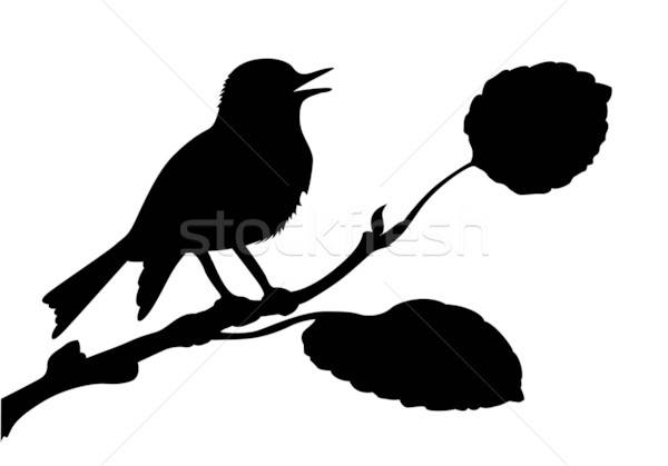 vector silhouette of the bird on branch Stock photo © basel101658