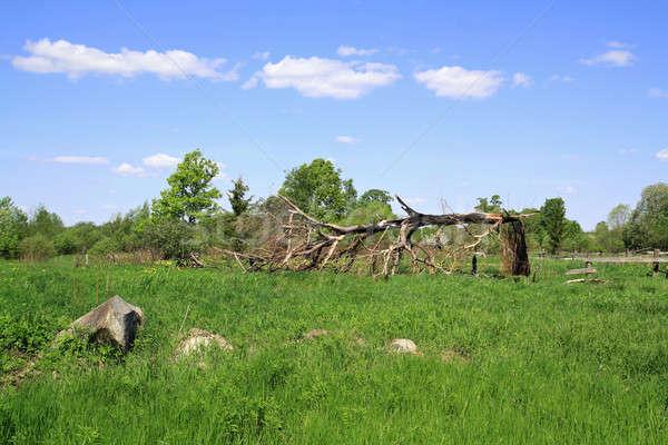 Roto roble cielo árbol fuego signo Foto stock © basel101658