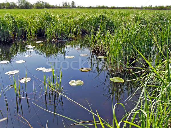 Faible lac domaine eau printemps nature Photo stock © basel101658