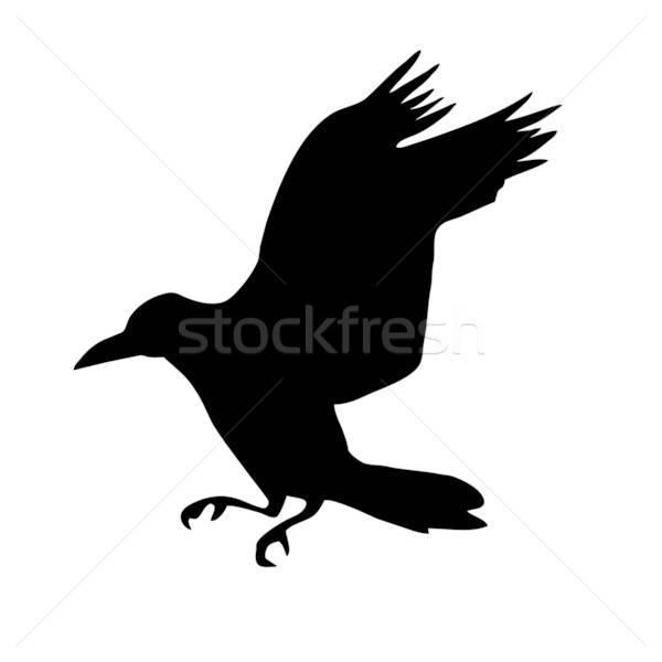 Vector silhouet raaf geïsoleerd witte ontwerp Stockfoto © basel101658