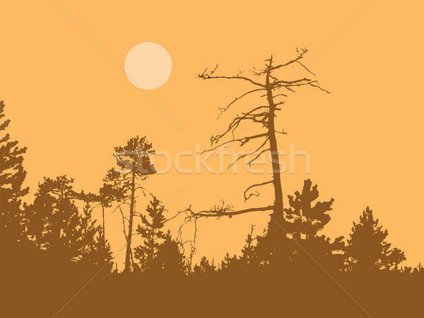 Vetor desenho silhueta secar árvore Foto stock © basel101658